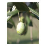 Olivo en Italia Plantilla De Membrete