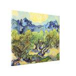 Olivos de Van Gogh, bella arte del vintage Lona Estirada Galerías