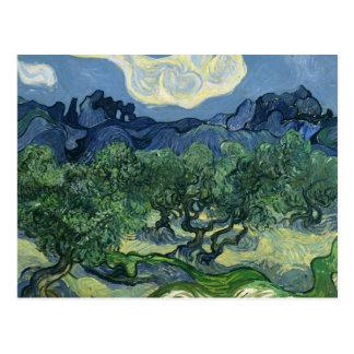 Olivos de Van Gogh Tarjetas Postales