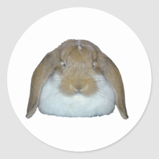 Ollie Bunnies - Rabbit Bunny Cute Adorable Classic Round Sticker