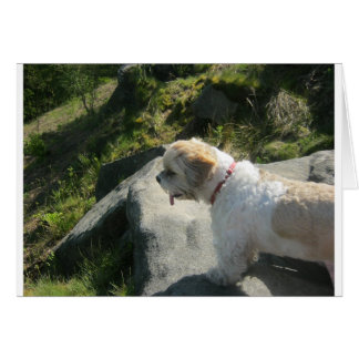 Ollie dog cliff edge card