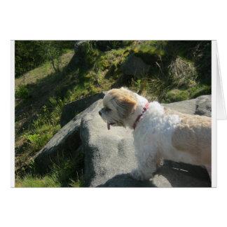 Ollie dog cliff edge card