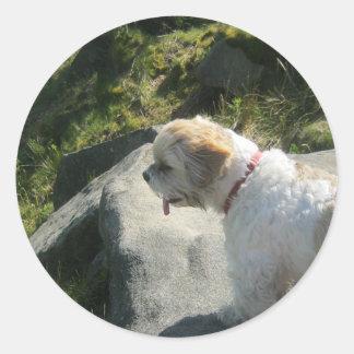 Ollie dog cliff edge classic round sticker