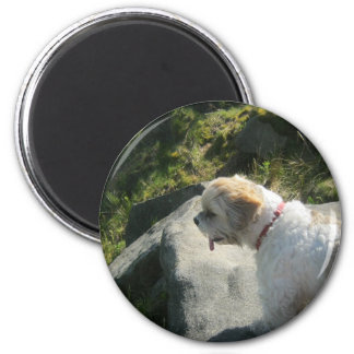 Ollie dog cliff edge magnet