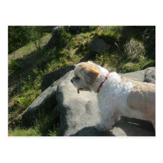 Ollie dog cliff edge postcard