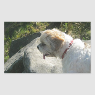 Ollie dog cliff edge rectangular sticker