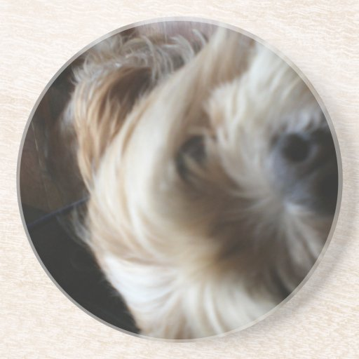 Ollie dog lhasa apso head upside down surprise beverage coasters