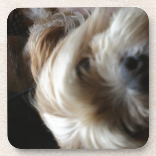 Ollie dog lhasa apso head upside down surprise coasters