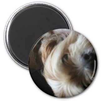 Ollie dog lhasa apso head upside down surprise magnet
