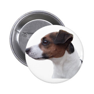 Ollie the Jack Russell Pinback Buttons
