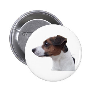 Ollie the Jack Russell Buttons