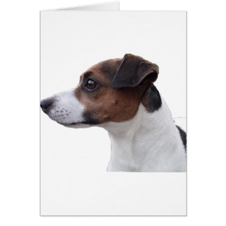 Ollie the Jack Russell Card