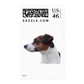 Ollie the Jack Russell Postage Stamps