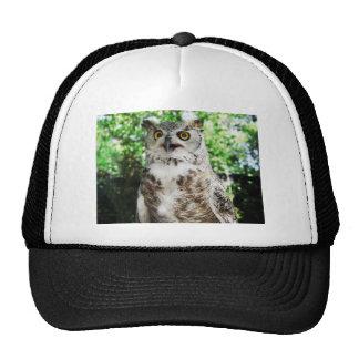 OLLY THE OWL HATS