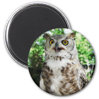 """ OLLY "" THE OWL MAGNET"