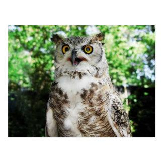 """"""" OLLY """" THE OWL POSTCARD"""