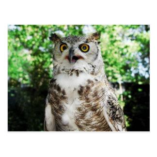 OLLY THE OWL POSTCARD