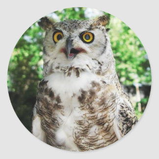 """"""" OLLY """" THE OWL STICKER"""