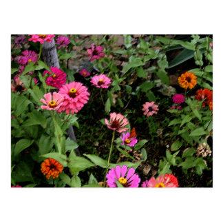 Olly's flowers (Zenia's) in his Butterfly Garden Postcard