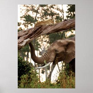 Olor de la prueba del elefante (Loxodonta) del Póster
