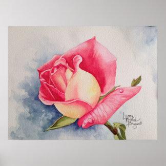 Olor del 1B color de rosa Póster