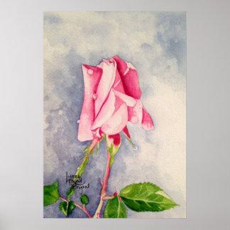Olor del 1D color de rosa Póster