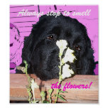 Olor del poster del perro de Terranova los tlowers