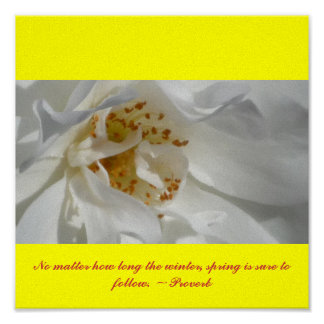 Olor del rosa blanco póster