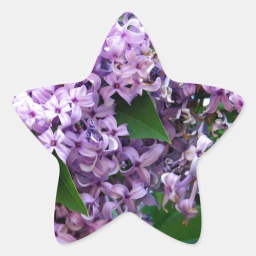 Olores dulces calcomanía forma de estrellae