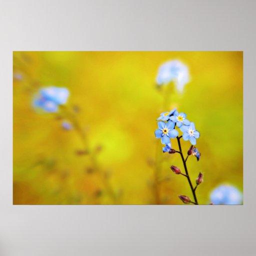Olvídeme no impresión de las flores póster