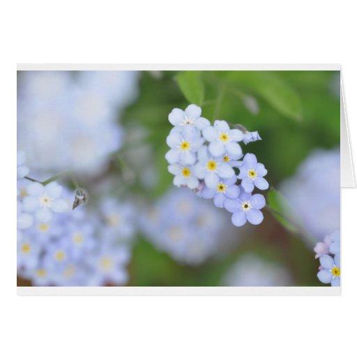 Olvídeme no las flores felicitación