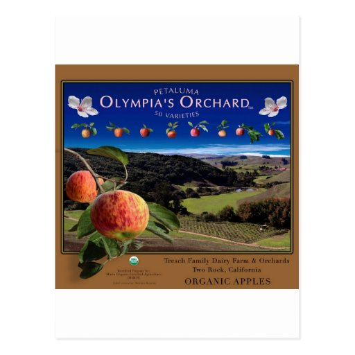 Olympia's Orchard Postcards