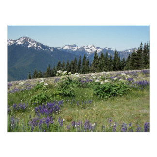Olympic Mountains Meadow Landscape Photo Poster