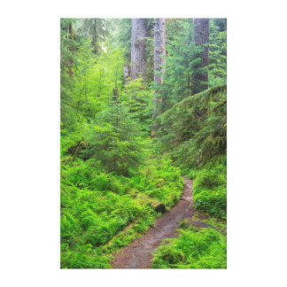 Olympic National Park, Forest trail Canvas Print