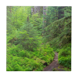 Olympic National Park, Forest trail Tile