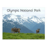 Olympic National Park Postcards