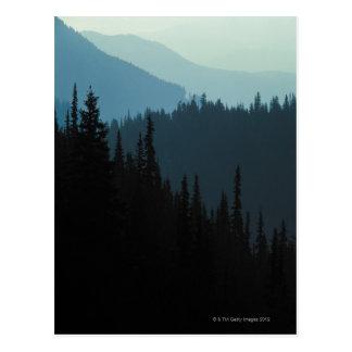 Olympic National Park , Washington Postcard
