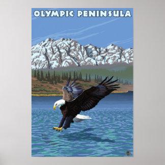 Olympic Peninsula, WashingtonFishing Eagle Posters