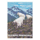 Olympic Peninsula, WashingtonMountain Goats Poster
