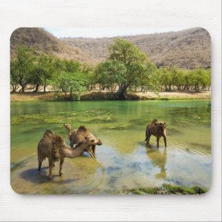 Omán, darbat del lecho de un río seco, dromedarios mousepads