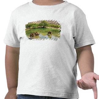 Omán, darbat del lecho de un río seco, dromedarios camiseta