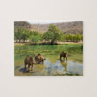 Omán, darbat del lecho de un río seco, dromedarios rompecabeza