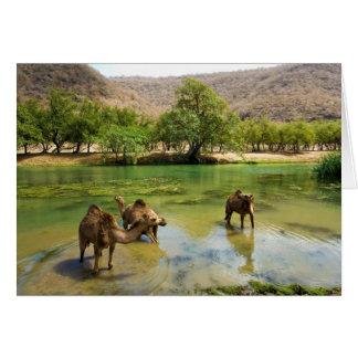 Omán, darbat del lecho de un río seco, dromedarios tarjeta de felicitación