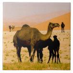 Omán, desierto de Khali del Al de la frotación, ca Teja