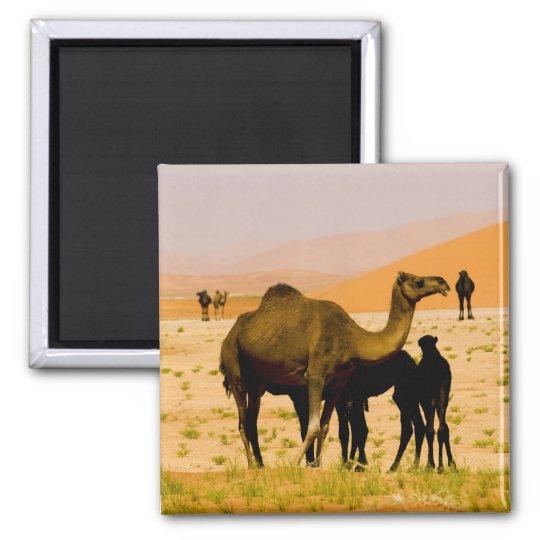 Omán, desierto de Khali del Al de la frotación, ca Imán Cuadrado