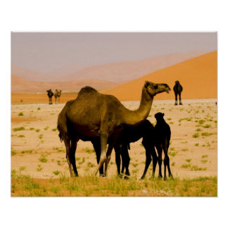 Omán, desierto de Khali del Al de la frotación, ca Poster