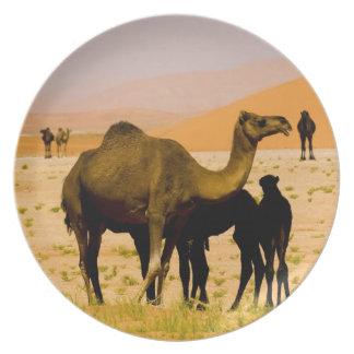 Omán, desierto de Khali del Al de la frotación, ca Plato De Comida