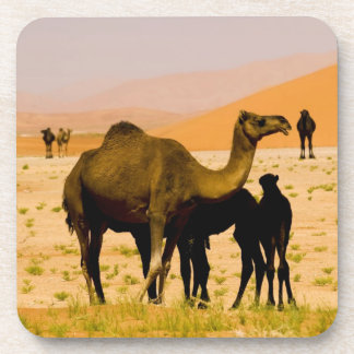 Omán, desierto de Khali del Al de la frotación, ca Posavaso