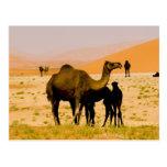 Omán, desierto de Khali del Al de la frotación, ca Postales