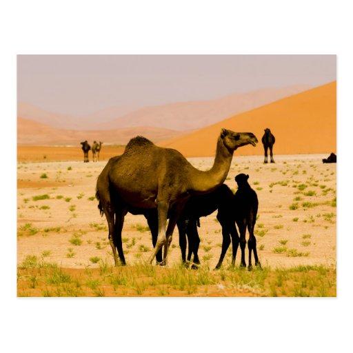 Omán, desierto de Khali del Al de la frotación, Postal
